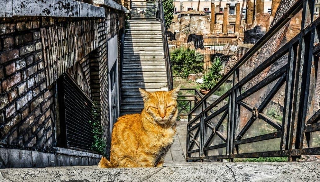 Largo-di-Torre-Argentin_Cat-Sanctuary